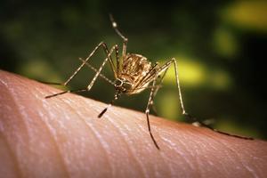 Lotta contro la zanzara tigre