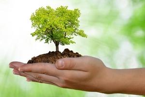 Ambiente – In arrivo un nuovo polmone verde al parco urbano del Conca