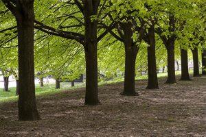 Piano del verde 2021 – Potature di alberi e manutenzione dei parchi
